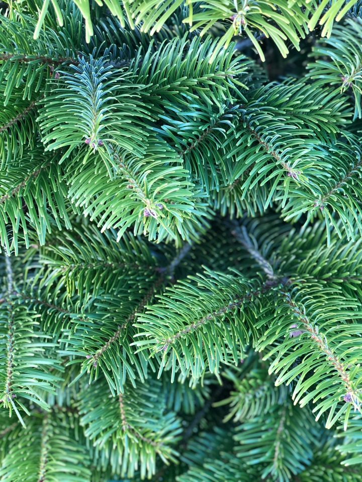 Blogmas Day 6: Christmas Tree Foraging